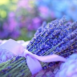 aromaterapia per smettere di fumare main